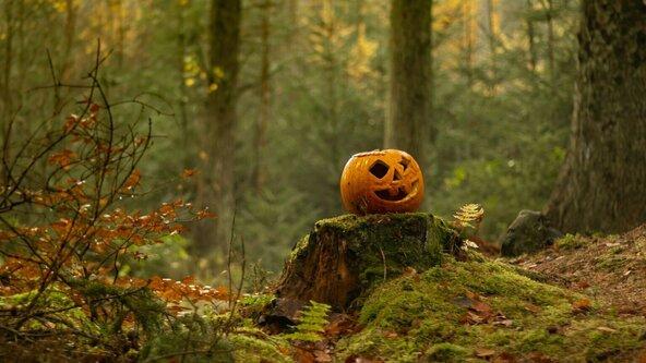 Halloween Self Guided Trail
