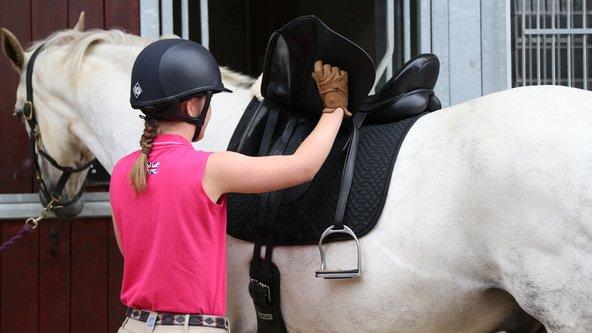 4710 - Horse Care Tier 2 - Preliminary Horse Care Certificate