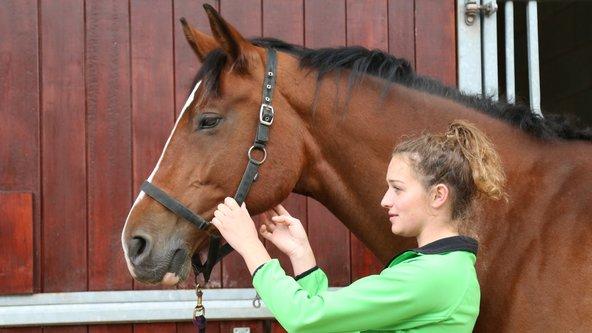 4710 - Horse Care Tier 3 - Novice Horse Care Certificate